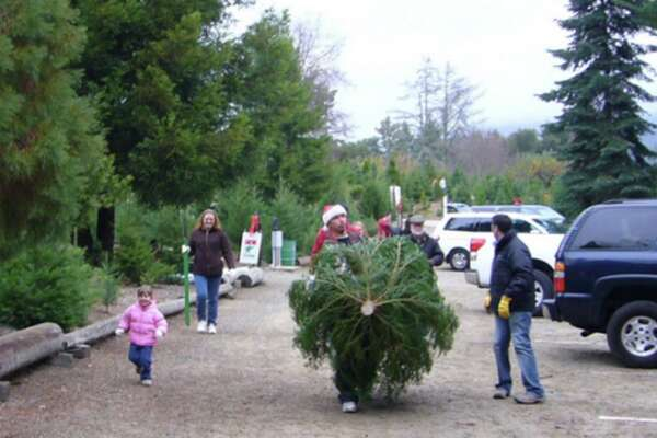 California Christmas Tree Farmer 90 Percent Of What I Planted Died