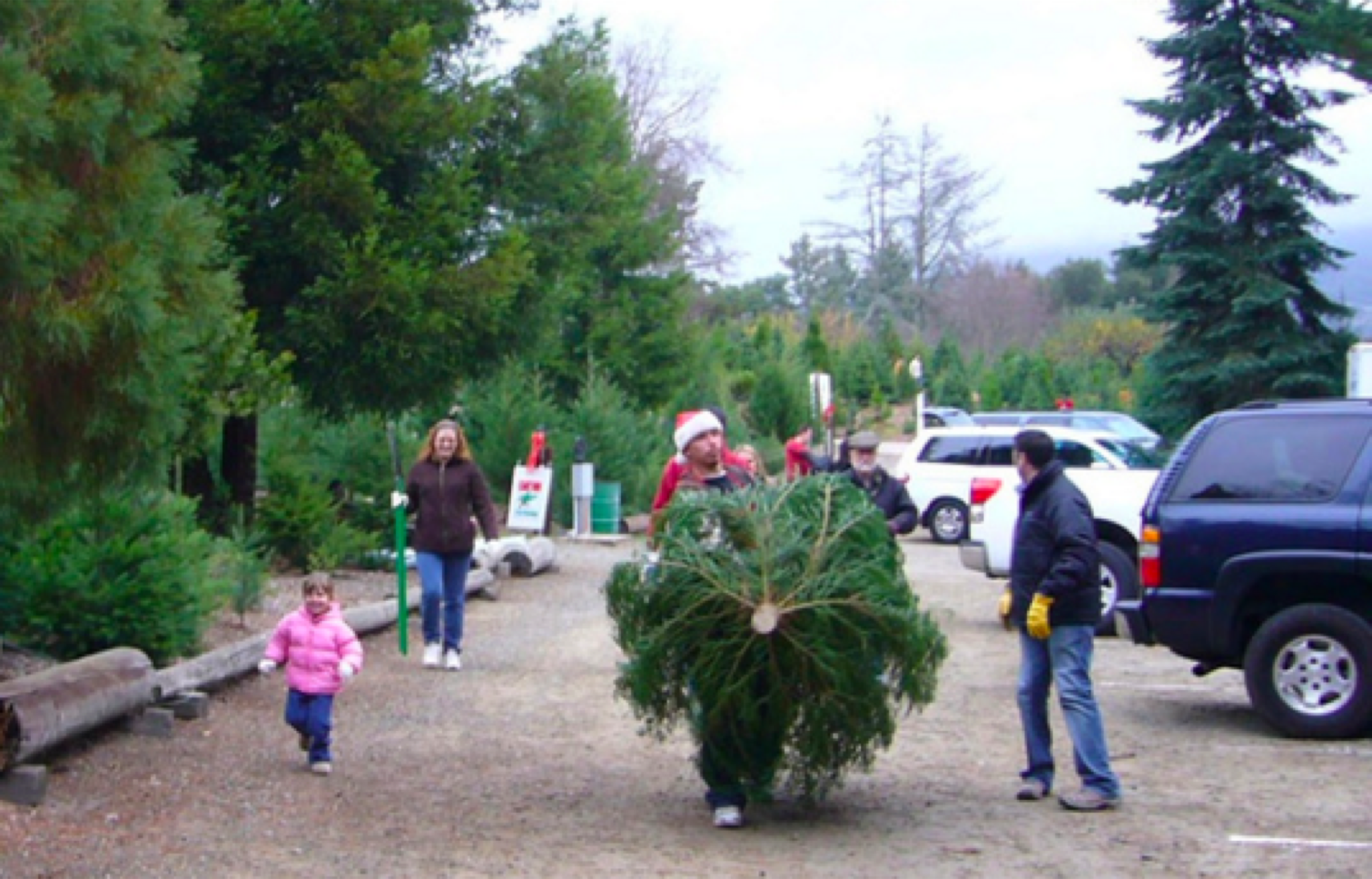california christmas tree farmer 90 percent of what i planted died sfgate