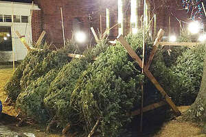 Christmas tree sales offer 'green' holiday tradition - Photo