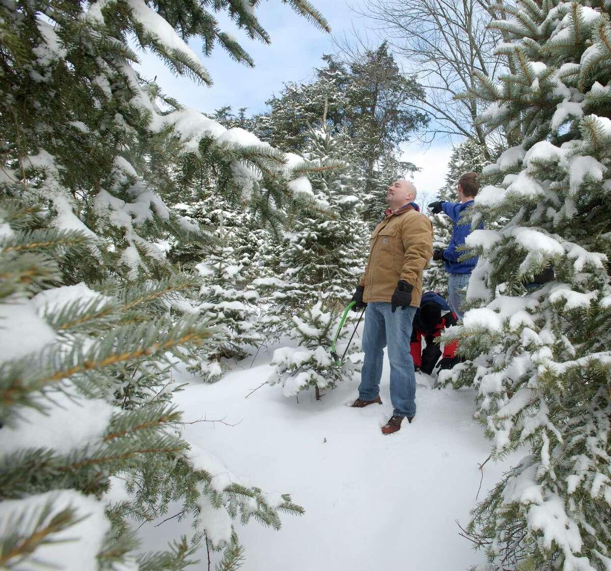 Paproski's Christmas Tree Farm, Newtown Website