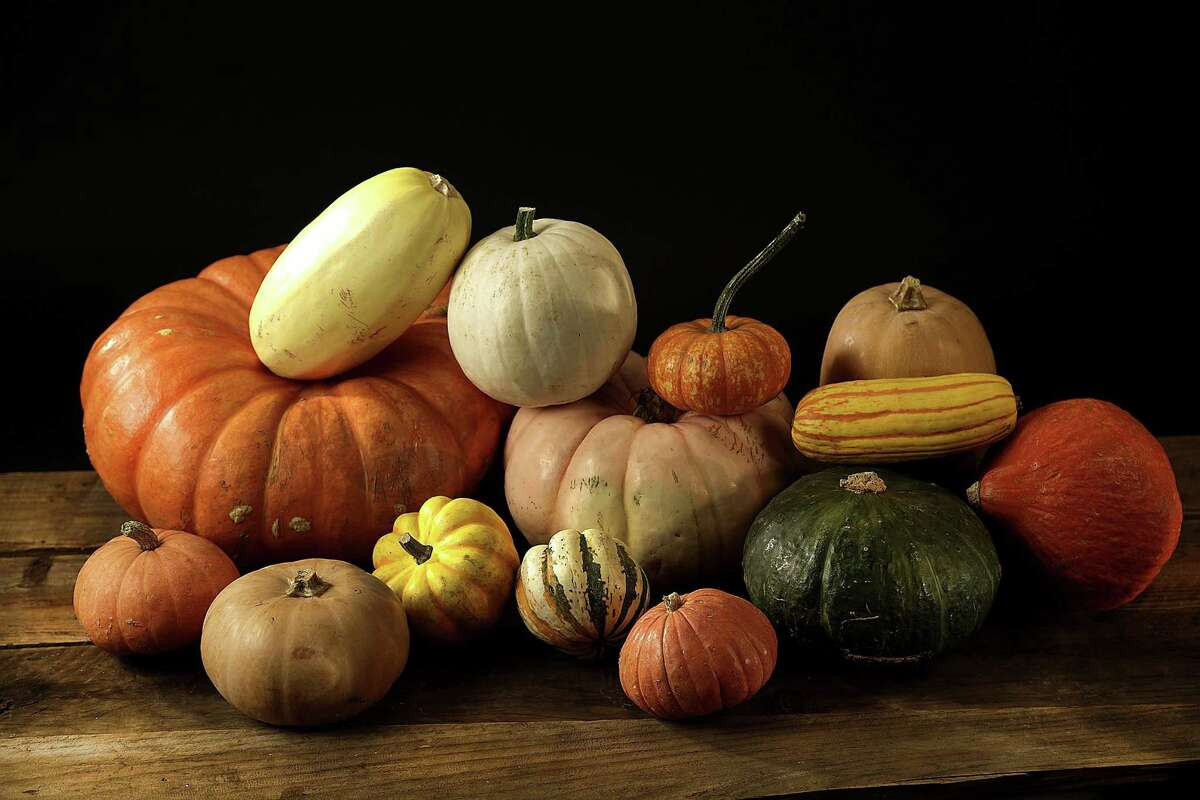 A multitude of different squash varieties