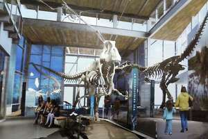 Witte reveals big dinosaur plans - Photo
