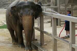 Animal rights group sues San Antonio Zoo in hopes of moving Lucky the elephant - Photo