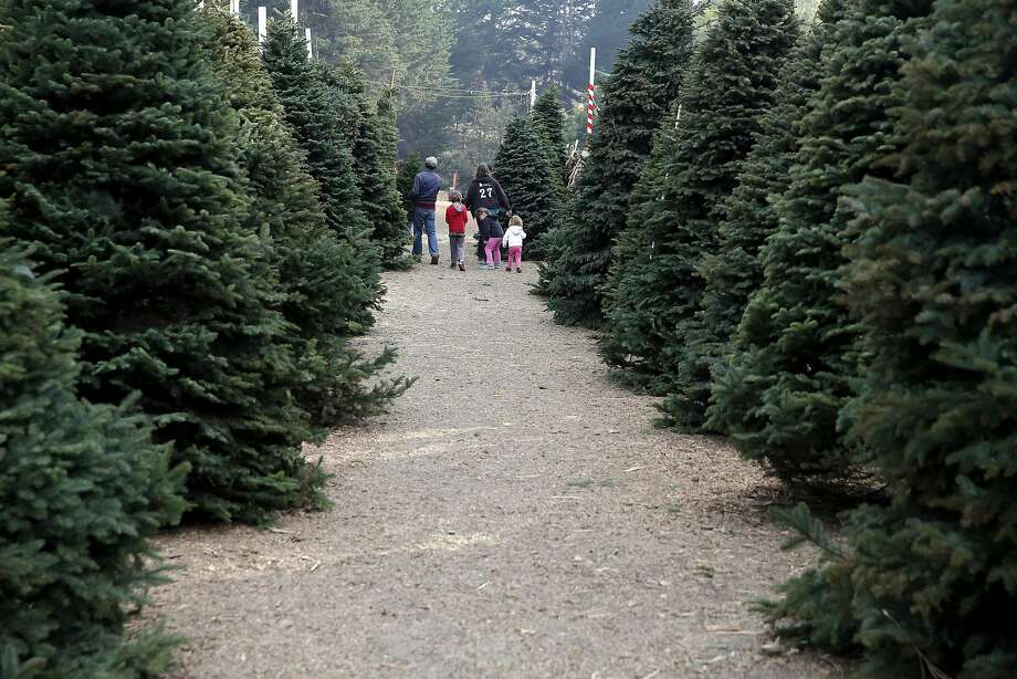 A woman and three children leave with a tree from Clancy's Christmas Trees in San Francisco, California, on Wednesday, Dec. 2, 2015. Photo: Connor Radnovich, The Chronicle