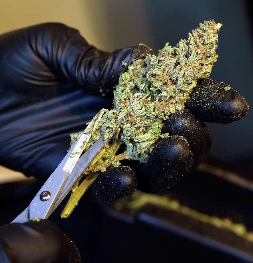 Marijuana Photo: John Burgess / Associated Press / The Press Democrat