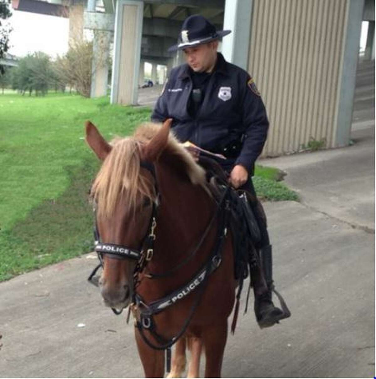 Charlotte, a 6-year-old Tennessee Walker and member of the Houston Police Department's mounted patrol, died in the line of duty when she was struck by a moving vehicle in downtown Houston, Dec. 3, 2015.