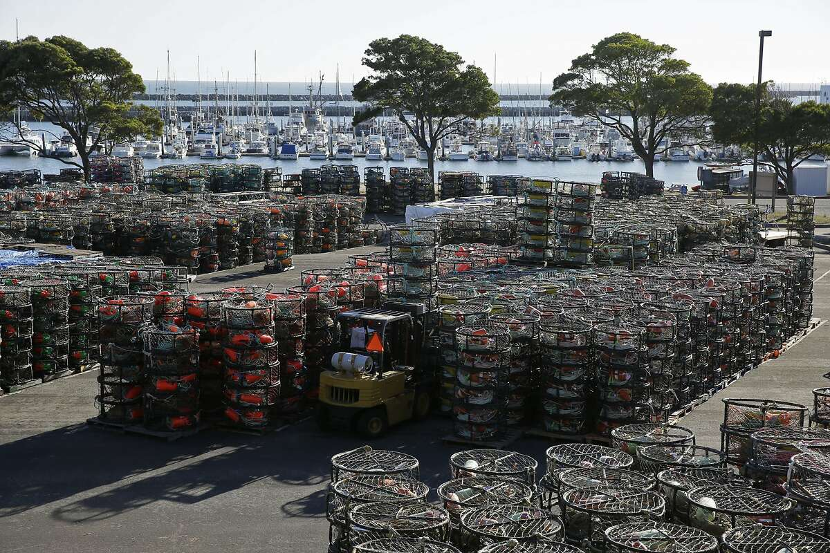 In this photo taken Thursday, Nov. 12, 2015, crab pots fill a large section of a parking lot at Pillar Point Harbor in Half Moon Bay, Calif. California has delayed the Nov. 15 start of its commercial crab season after finding dangerous levels of a toxin in crabs. Officials in Oregon and Washington are testing crab samples and will decide soon whether to open its coastal season by Dec. 1 as planned. (AP Photo/Eric Risberg)