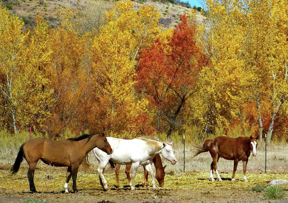 Chronicle reader Linda Brannen of New Braunfels submitted this vacation photo taken in Fort Davis. Photo: Linda Brannen / Linda Brannen