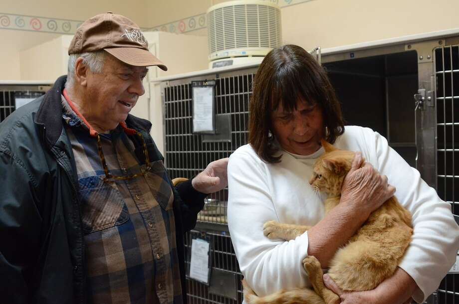 Novato residents Stephen Payne, 78, and Nancy Payne, 76, reunite with Ginger — their short-haired Tabby that went missing for eight years. Photo: Courtesy Of Marin Humane Society
