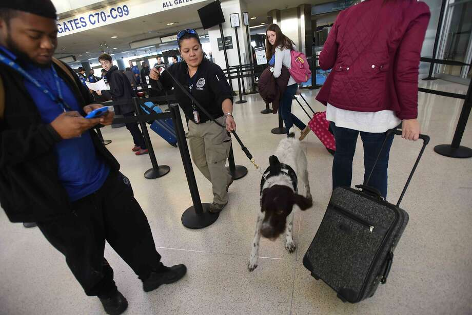 A TSA Inspector/K9 Handler walks her explosive dog through a security checkpoint at the Newark International Airport Wednesday, Nov. 25, 2015, in Newark, N.J. Photo: Chris Pedota, Associated Press