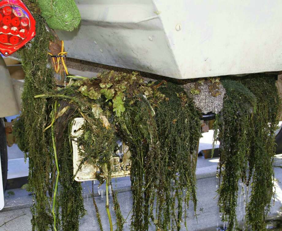 Boaters who absent-mindedly (and illegally) allow invasive aquatic plants to hitch rides on boat trailers are responsible for the spread of the alien plants that damage and destroy fisheries. Photo: Shannon Tompkins / Houston Chronicle