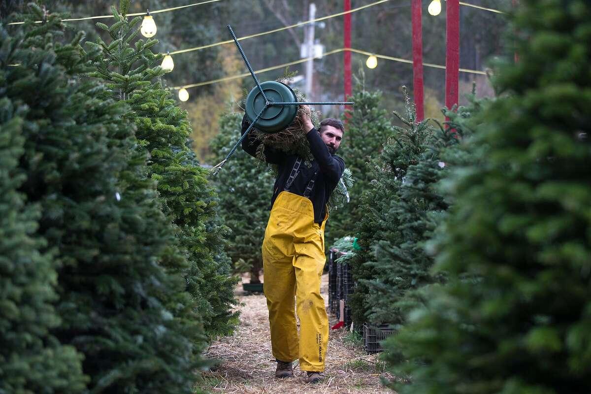 Tony Cozzolino works on his Christmas tree lot on Saturday, Dec. 5, 2015 in half Moon Bay, Calif.