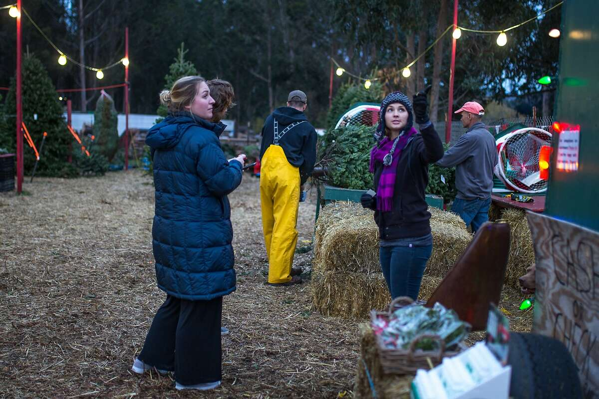 Stephanie Cozzolino points to a sign with the name of the Christmas tree lot on Saturday, Dec. 5, 2015 in half Moon Bay, Calif.