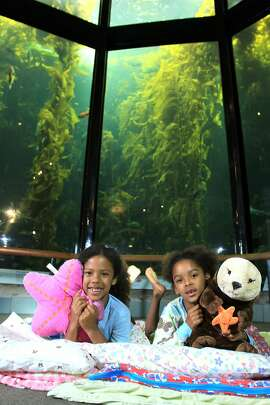 Families can greet the new year with the denizens of the Monterey Bay Aquarium by joining the New Year's Eve Seashore Sleepover.