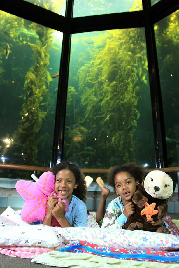 Families can greet the new year with the denizens of the Monterey Bay Aquarium by joining the New Year's Eve Seashore Sleepover. Photo: Monterey Bay Aquarium, ©Monterey Bay Aquarium, Photo By