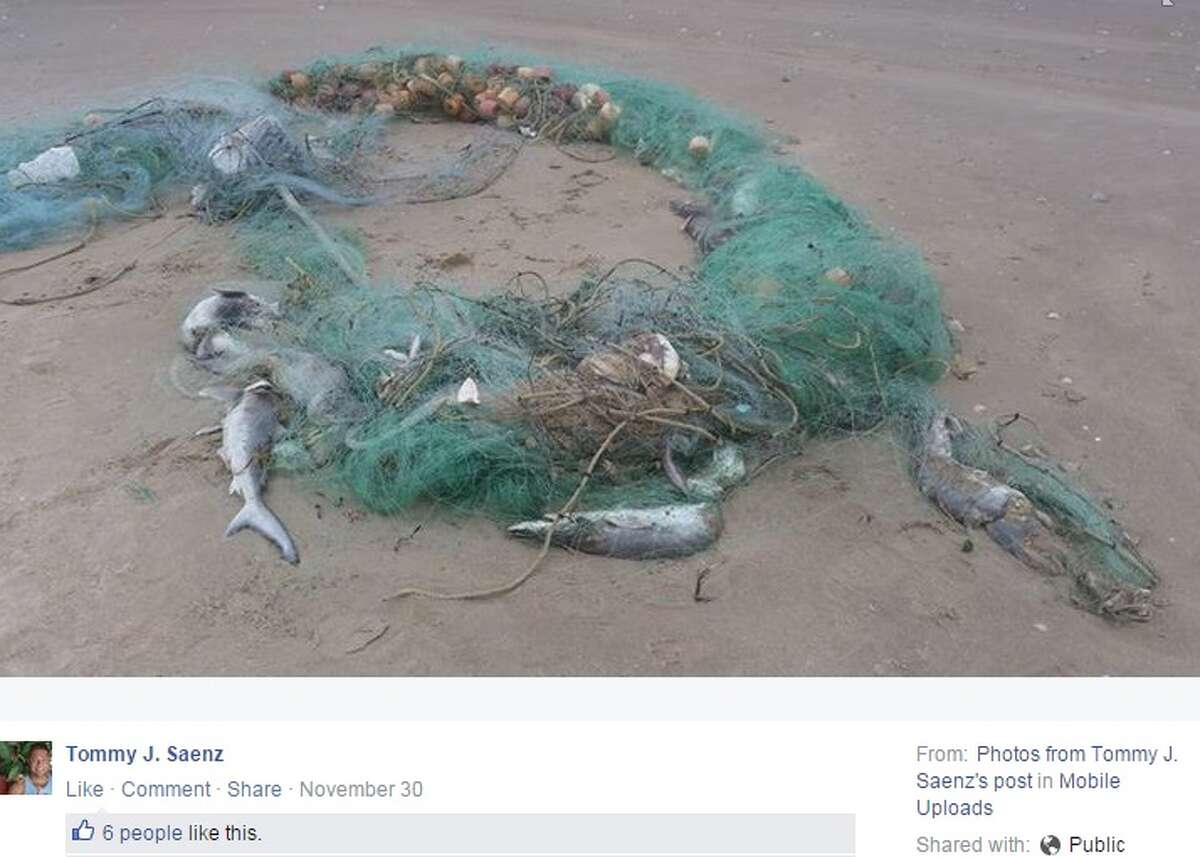 Seventy sharks were found dead and tangled in a gill net washed ashore a South Padre Island beach on Nov. 30, Texas Parks and Wildlife said.