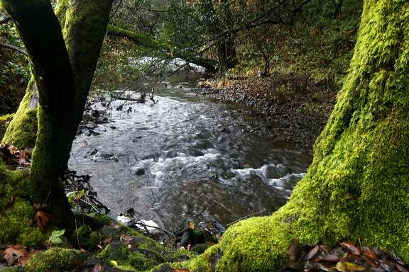 Water in San Geronimo Creek flows through Forest Knolls, Calif., on Tuesday, Dec. 14, 2010, where biologists are monitoring coho salmon activity.