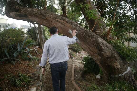 Alan Karras passes beneath a tree which had a tree removal sign that says that the Department of Public Works had determined the tree at Storrie/Ord Park had to be removed in the interest of public safety because it was  hazardous  on Wednesday, December 9,  2015 in San Francisco, Calif.   Karras has had parts of trees from the park fall onto his home.