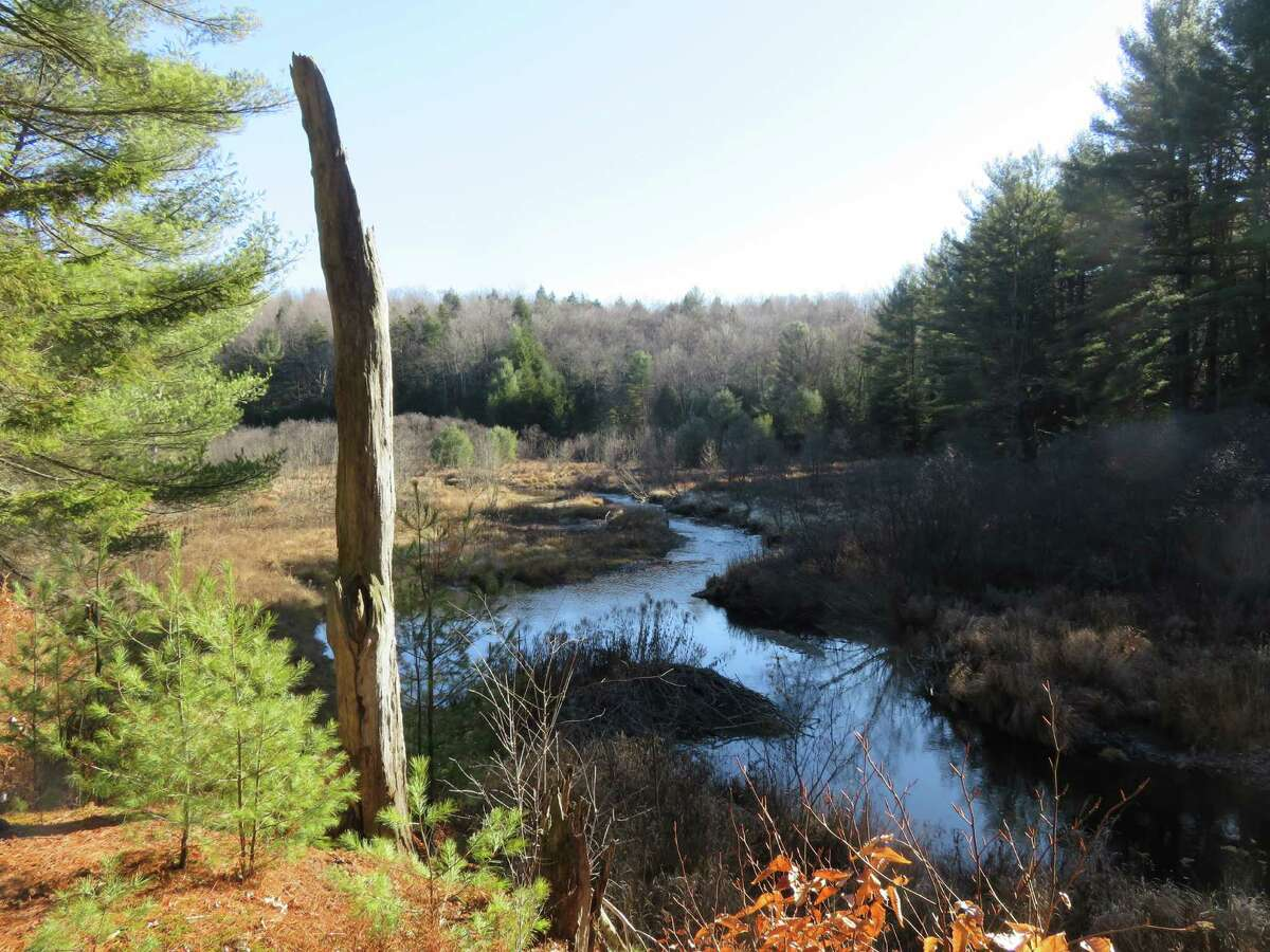 Cadman Creek winds through a meadow in Saratoga County forest land near the Hennig Preserve in Providence. (Gillian Scott / Special to the Times Union)