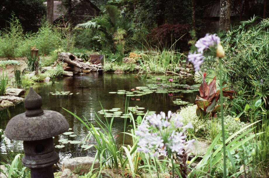 Agapanthus and variegated cannas (also shown below) are among the plants thriving in the bog garden attached to this pond. Photo: No Info Given / handout slide