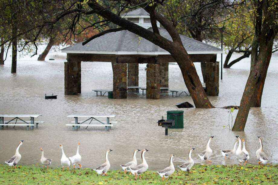 Geese walks along the edge of rising floodwater in Towne Lake Park on Nov. 27 in McKinney, Texas. Most of the Dallas-Fort Worth area was pounded by storms then. Photo: Smiley N. Pool /Dallas Morning News /via The Associated Press / The Dallas Morning News