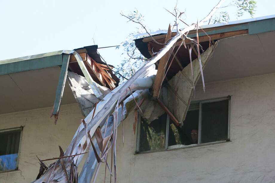 A building inspector views an eucalyptus tree that was downed in a storm and crashed into the Fairmont Terrace Apartments on Fairmont Ave. in Oakland Friday, December 11, 2015. Photo: Douglas Zimmerman
