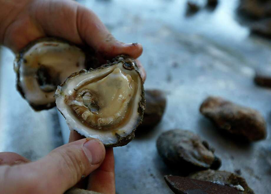 Captain Shpend Berisha opens an oyster during an interview on Prestige Oysters boat the Hustler in Galveston Bay Wednesday, Dec. 9, 2015, in Dickinson. Photo: James Nielsen, Houston Chronicle / © 2015  Houston Chronicle