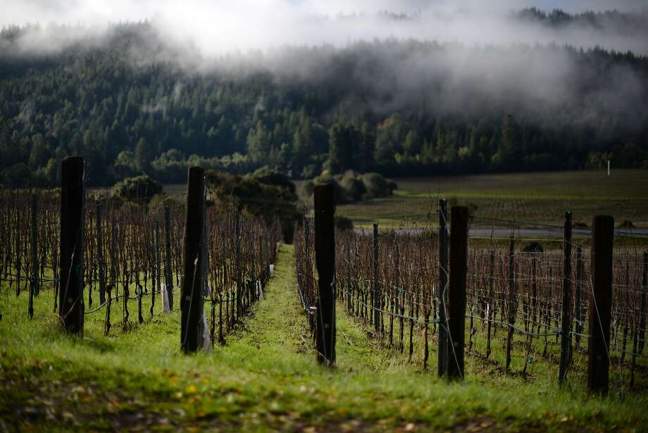 Lichen Estate vineyards, which produces sparkline wine, in the Anderson Valley in Boonville. Photo: Erik Castro, Special To The Chronicle