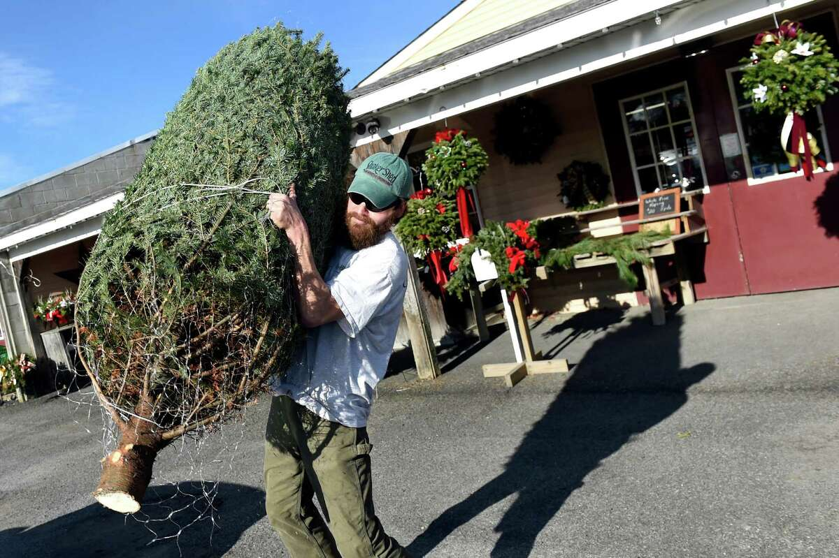 Employee Dustin Burton hoists a Christmas tree to load atop of a car on an unseasonably warm day on Saturday, Dec. 12, 2015, at Shaker Shed Farm and Market in Colonie, N.Y. (Cindy Schultz / Times Union)