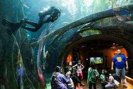 Visitors gather to look at fish in the Amazon rainforest tunnel, part of the Osher rainforest exhibit at the California Academy of Sciences, in San Francisco, California on Thursday, December 10, 2015.