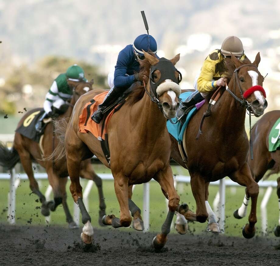 Circling with jockey Kyle Frey won the Miss America $50,000 Added on Sunday, Dec. 13, at Golden Gate Fields. The winning time was 1:45.26. Photo: Shane Micheli, Vassar Photography