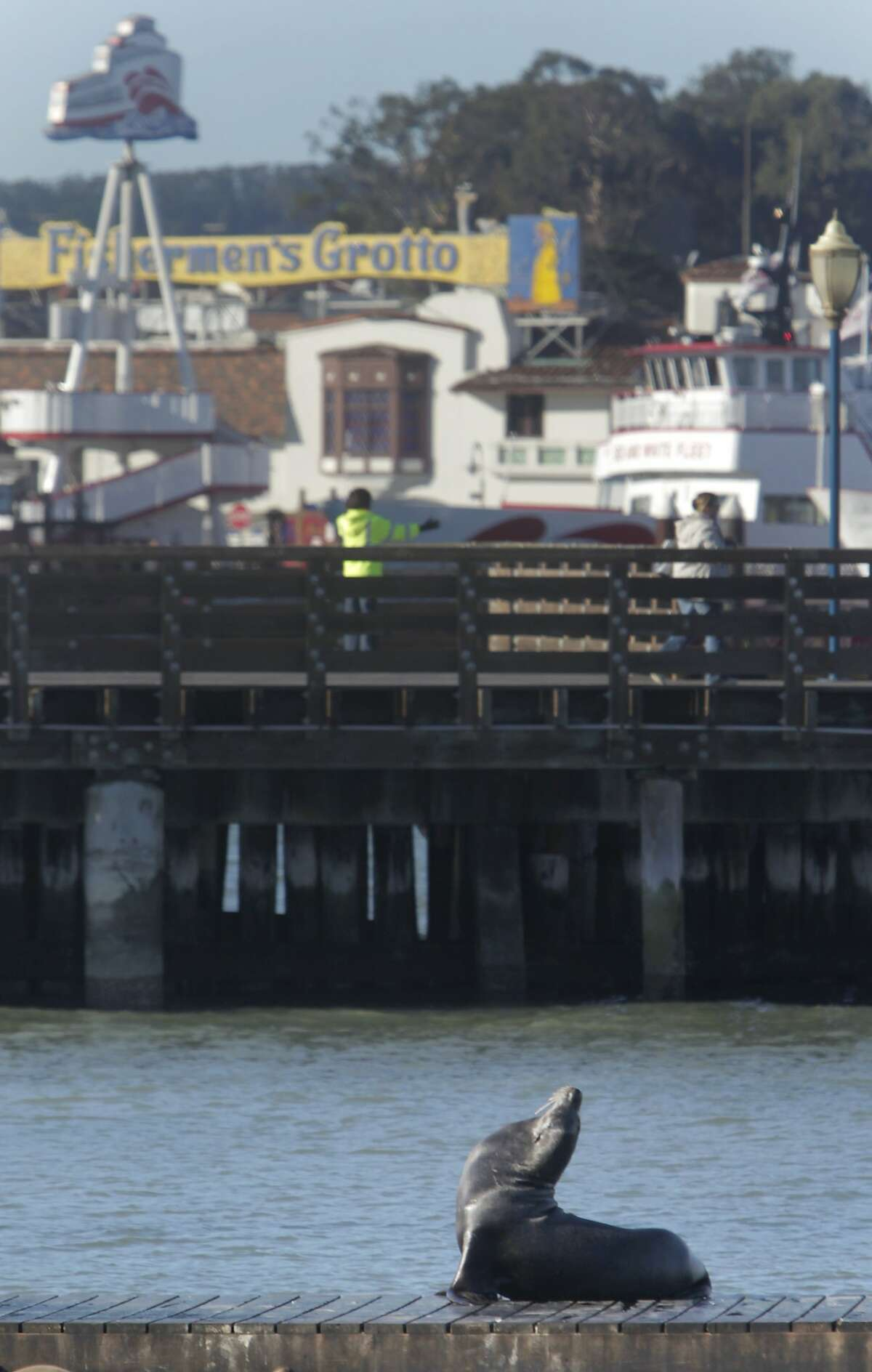 A sea lion basks in the sun on the dock at Pier 39 on Monday, December 14, 2015 in San Francisco, Calif.