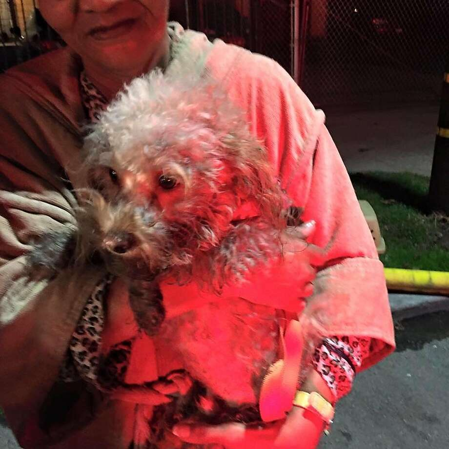 Oakland Firefighters rescued a dog from a burning building Wednesday night. Photo: Courtesy Of @Oaklandfirelive