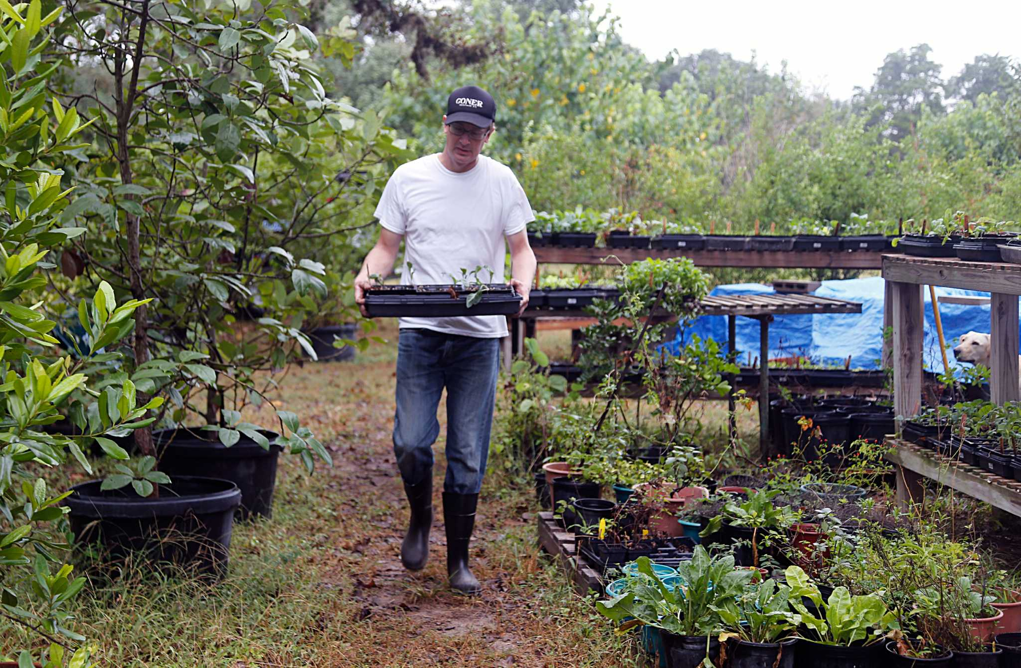 Do you have what it takes to WWOOF? - HoustonChronicle com
