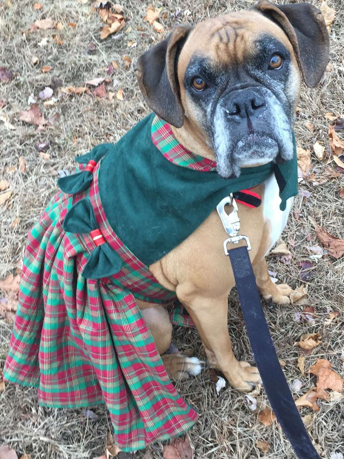Beth M. Pellegrino. It's her custom made, Scottish plaid Christmas dress. ORG XMIT: FDqgoUqCD5A9wv22NXzA