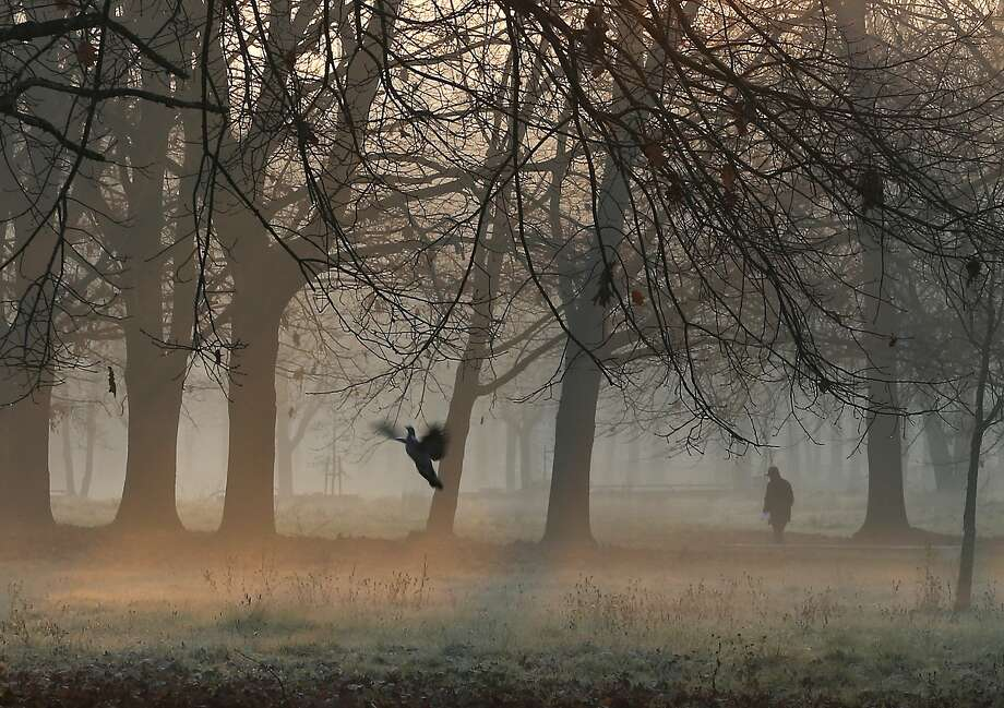 A man walks through the morning mist in a park in Rozzano, near Milan, northern Italy, Thursday, Dec. 17, 2015. Photo: Antonio Calanni, Associated Press