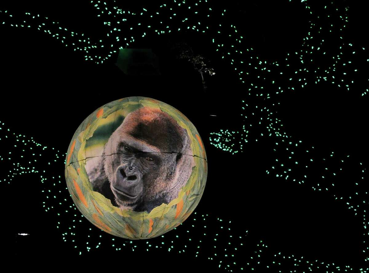 The image of a gorilla is projected on a large ball hanging in a tree at the Houston Zoo. The zoo uses more than 2 million lights in its annual holiday Zoo Lights display.
