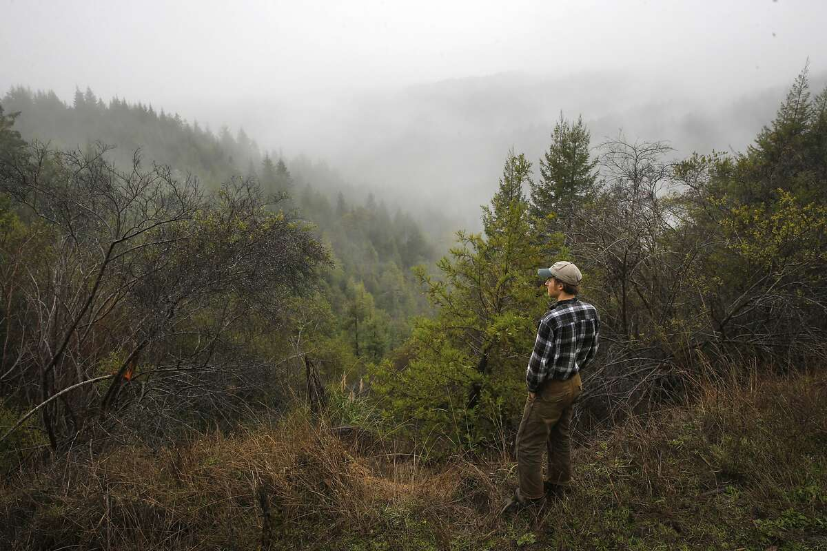 Madison Thomson a forester with The Conservation Fund looks out over some of the 1nearly 2,000 acres of the Big River Forest near Fort Bragg,, Calif. on Friday December 18, 2015. A government-run power company in Norway agreed to buy carbon credits from The Conservation Fund who own and manage the Big River and Salmon Creek Forests.