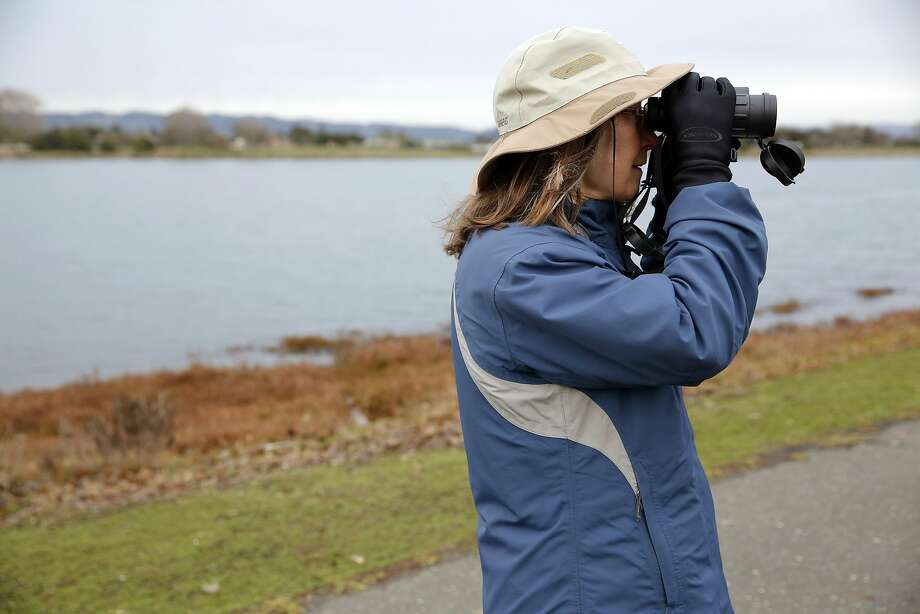 Ruth Toby peers for birds around San Leandro Bay in Oakland, California, on Sunday, Dec. 20, 2015. Photo: Connor Radnovich, The Chronicle