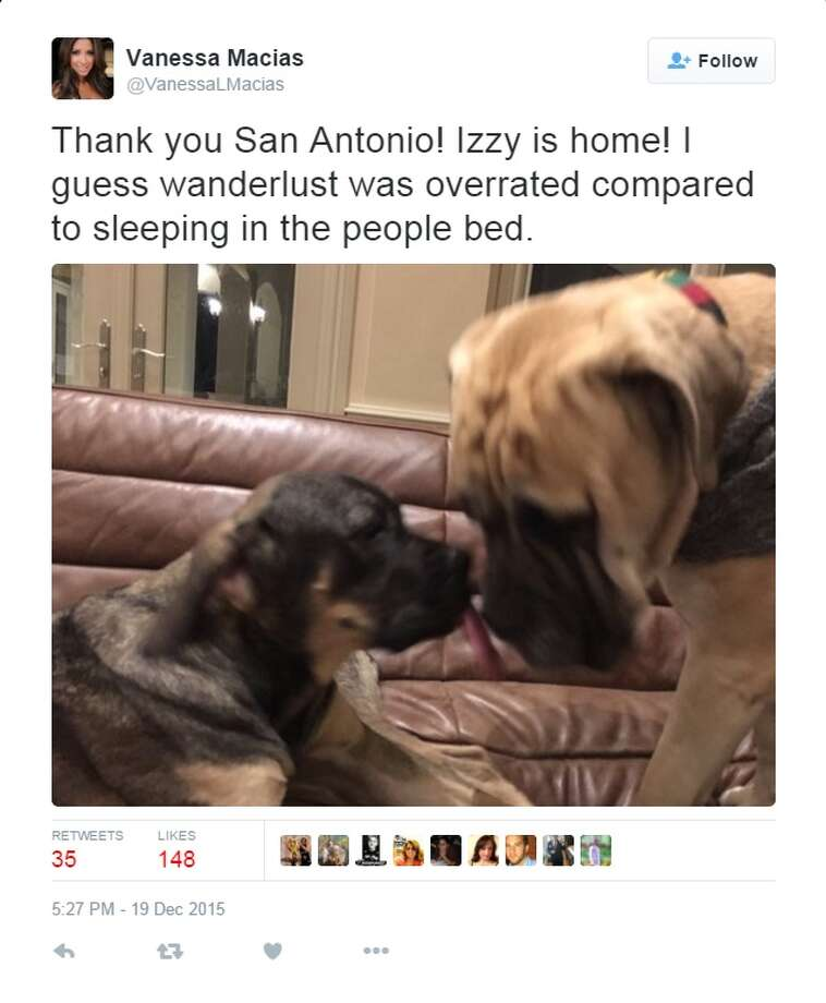 """Thank you San Antonio! Izzy is home! I guess wanderlust was overrated compared to sleeping in the people bed."" Photo: Twitter Screen Grabs"