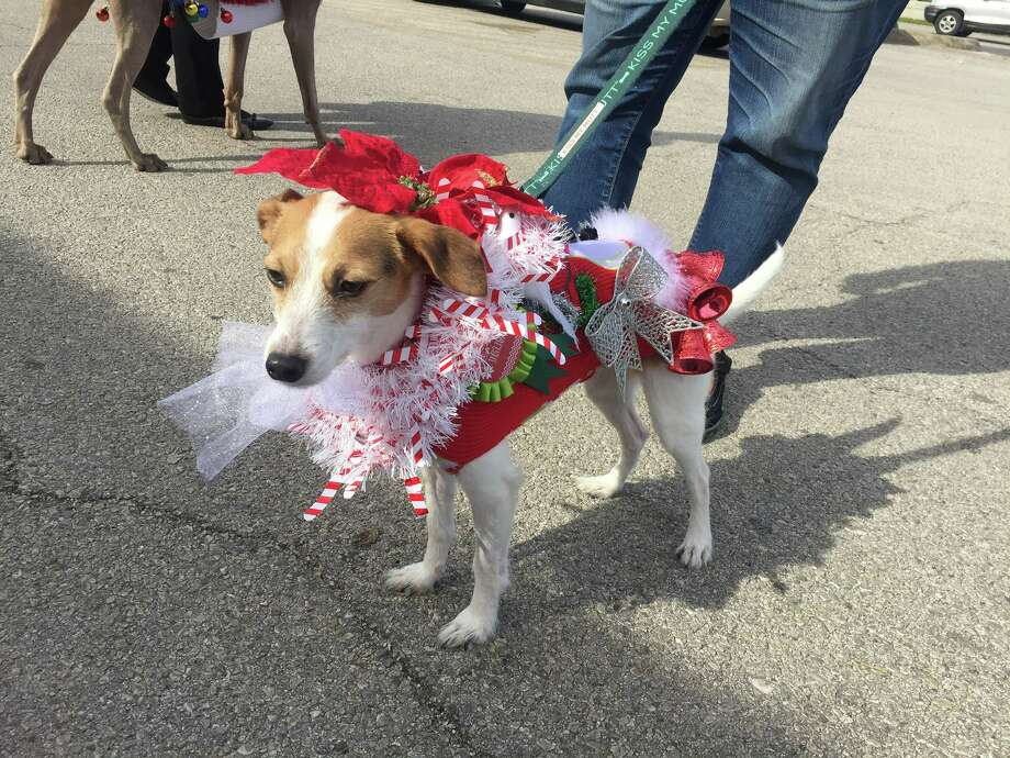 Dogs strut ugly Christmas sweaters on South Side - San Antonio ...