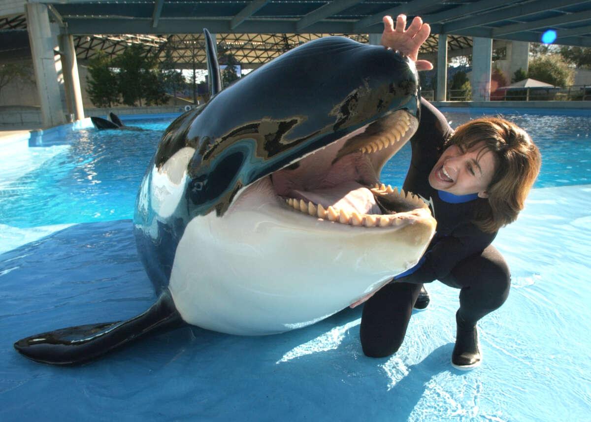 "Julie Scardina, SeaWorld's ""Animal Ambassador"" works with Unna, a 3,100 pound killer whale at the park, Friday, Mar. 7, 2003."