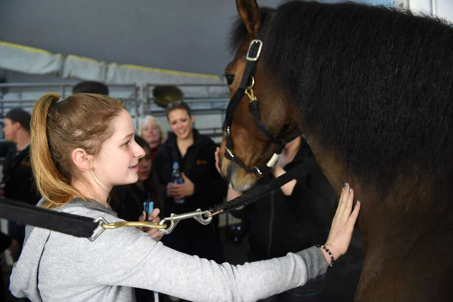 Athena Skopelite pets a horse during a meet and greet with The OdysseO horse show in San Francisco on December 22, 2015 Photo: Susana Bates, Special To The Chronicle