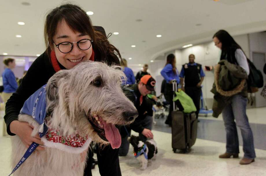Passenger Le Chen of Shanghai enjoys a moment with Konnery during the United Paws event on Tuesday at IAH. Photo: Melissa Phillip, Staff / © 2015 Houston Chronicle