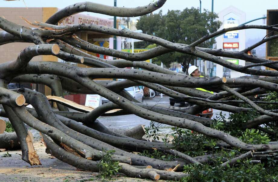 Alameda city workers cut up a large fallen tree that blocked both lanes of Park Street in Alameda, Calif., on Tuesday, Dec. 22, 2015. A fresh round of chilly rain is set to drench the region Christmas Eve, but Christmas Day will be dry, forecaster said Tuesday, Dec. 22, 2015. (Laura A. Oda/San Jose Mercury News via AP) Photo: Laura A. Oda, Associated Press