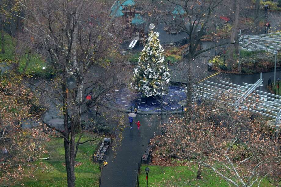 The Madison Square Park Christmas tree in New York is surrounded by yellow leaves and green grass. Photo: Chang W. Lee /New York Times / NYTNS