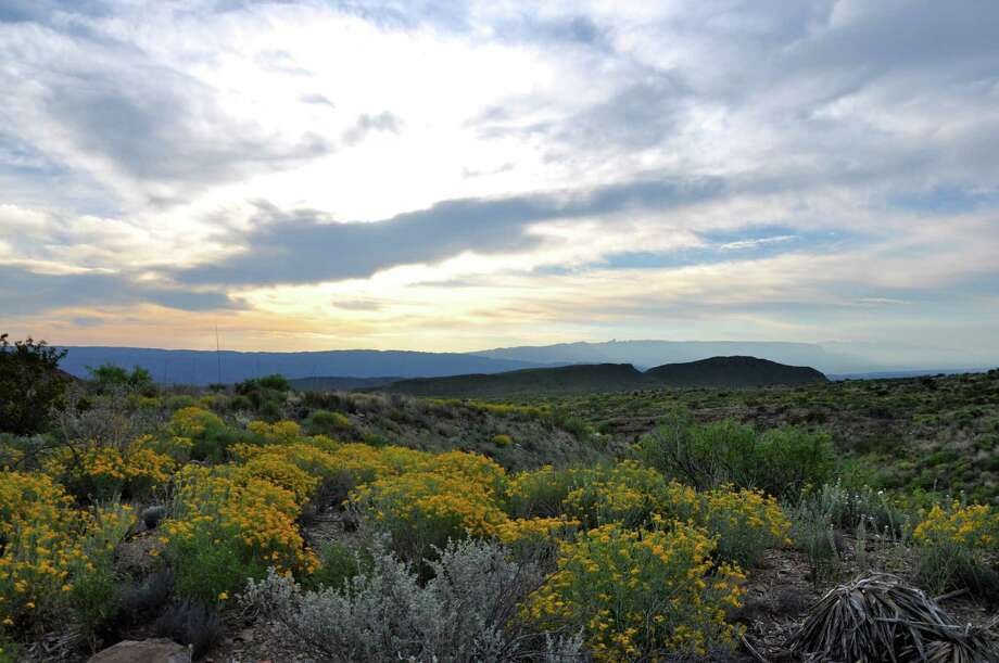 The Chihuahua Desert is in full bloom in Big Bend National Park, Texas. Photo: Melissa Ward Aguilar