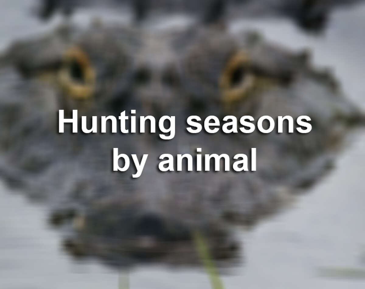 All animal hunting season information supplied by the Texas Parks and Wildlife