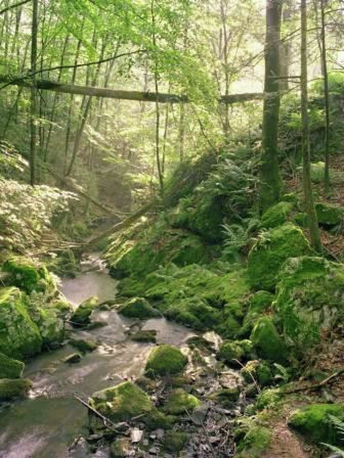 """The Bruce Museum's """"Mianus River Gorge: Photographs by William Abranowicz"""" exhibit features selected photos from Abranowicz that have captured the profound beauty and myriad faces of this primeval forest in our midst. It runs now through June 5. Find out more."""