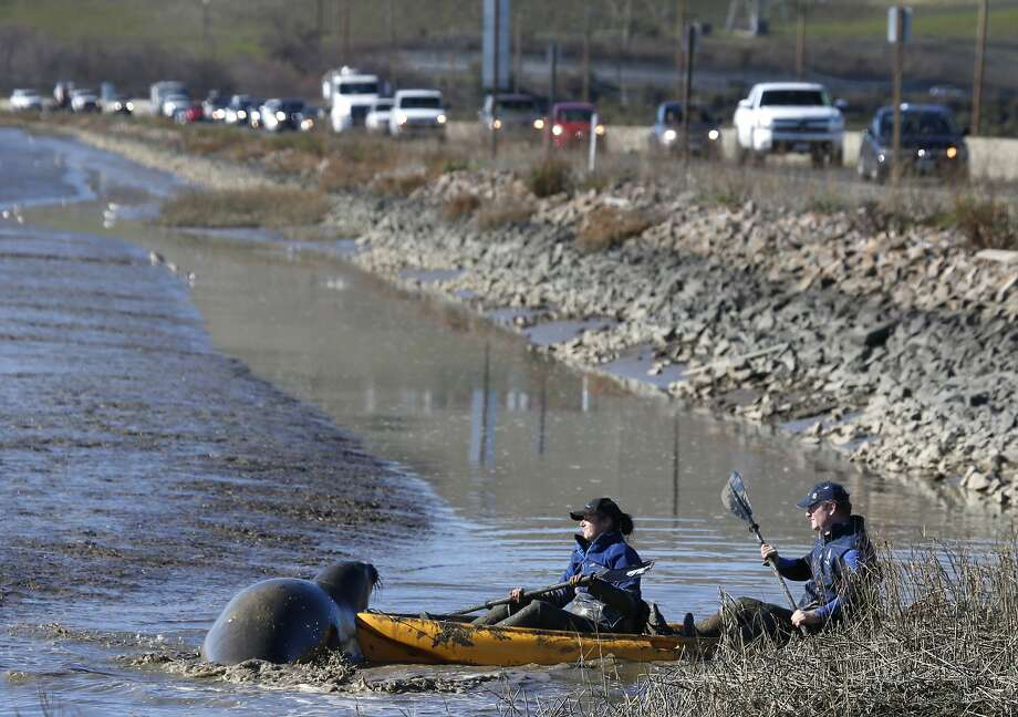 Readers asked about the area near Highway 37 after seeing stories last week about an elephant seal. Photo: Paul Chinn, The Chronicle
